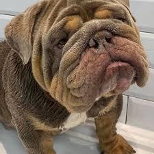 DOG G