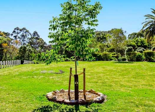 Macquarie Park, NSW (Northern Cemeteries)