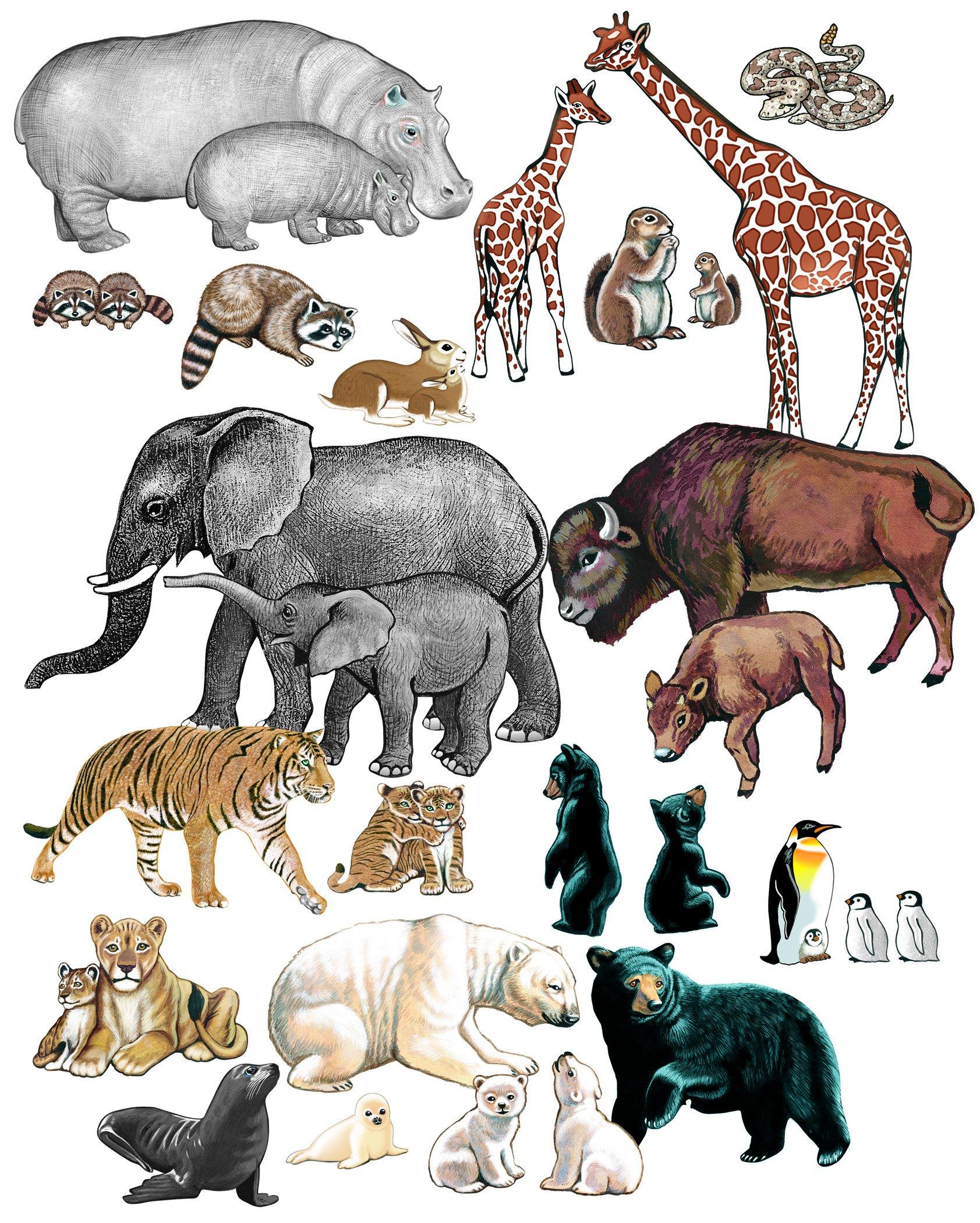 Wild Animals 248-22305