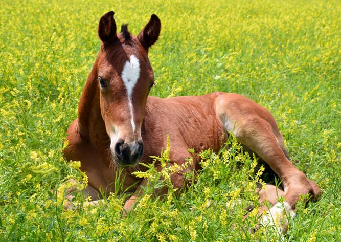 Fast-track your Breeding Program