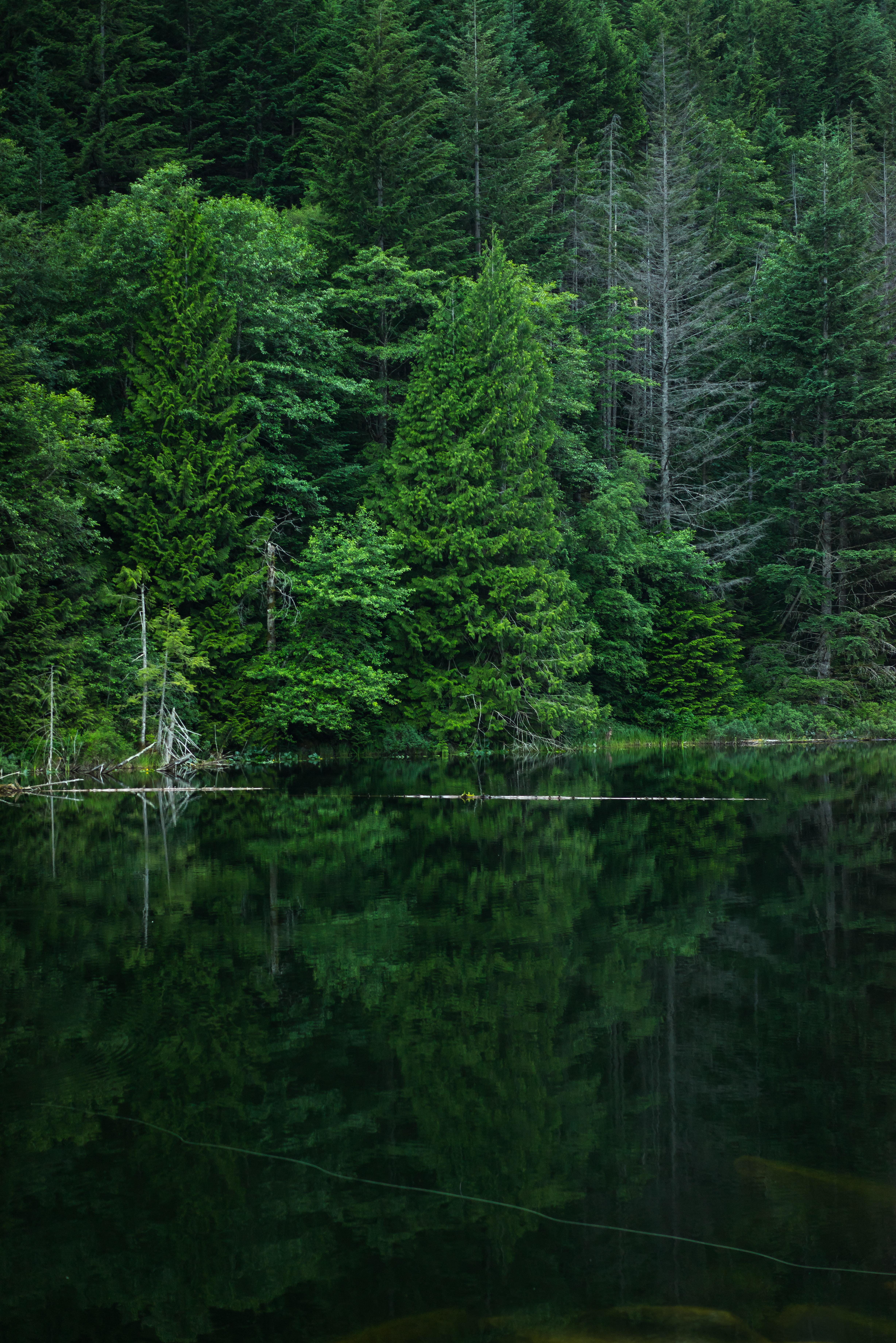 Afognak Island Forest Preservation - United States