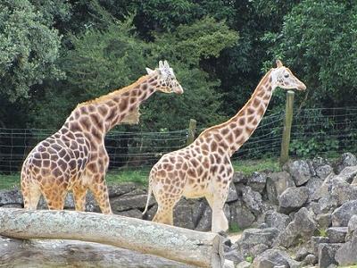 Zoos + Wildlife Parks