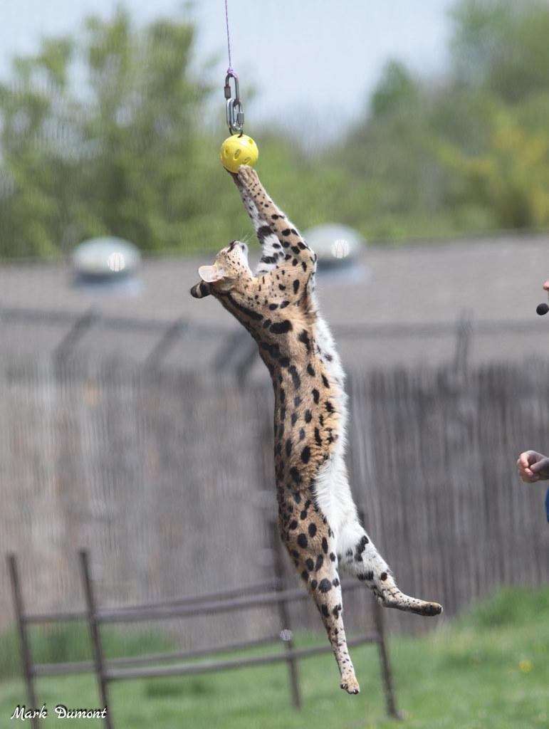 Serval Home Safari Quiz