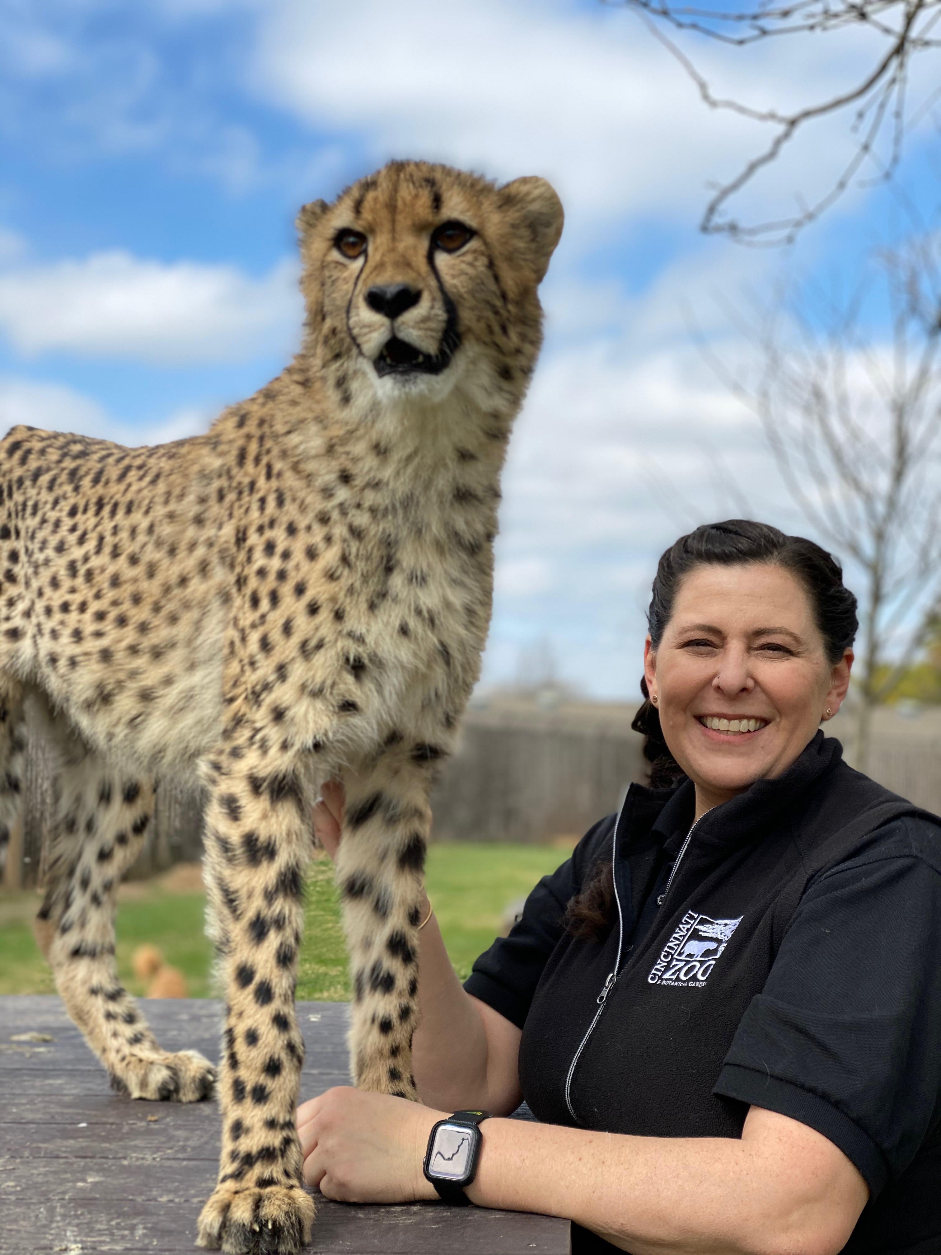 kris the cheetah rolls over