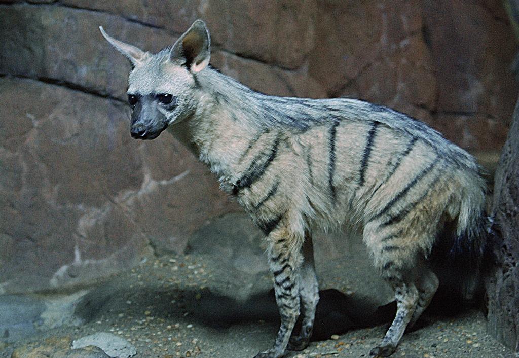 Aardwolf Home Safari Quiz