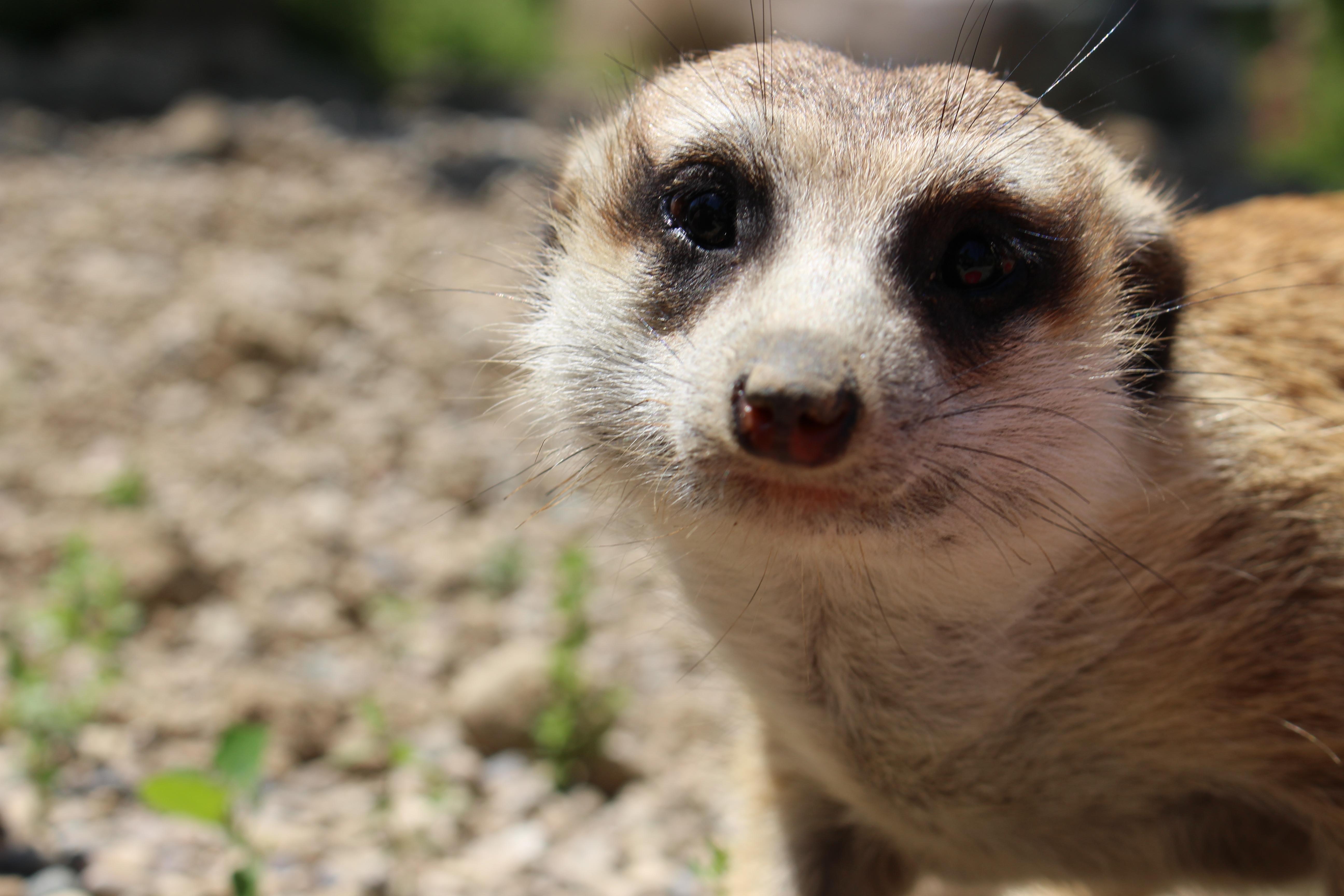 Meerkat Home Safari Quiz