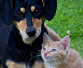 Hund + Katze
