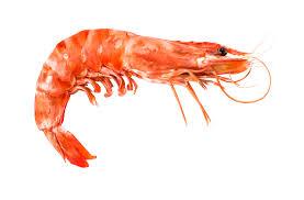 Shrimp/Prawn